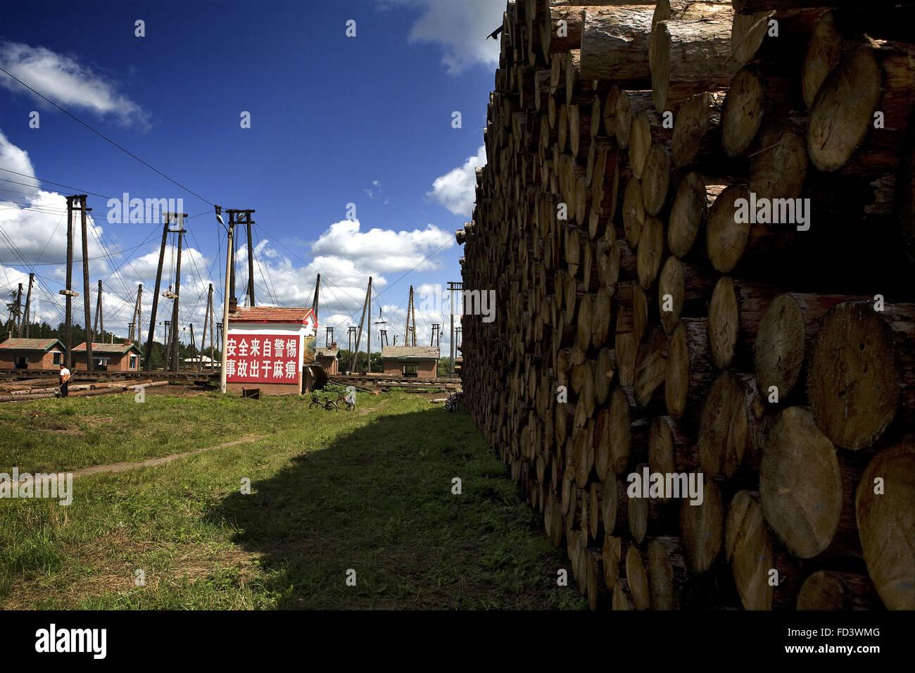 Tree Farm Baishan City Northeast Jilin Province China - Stock Image