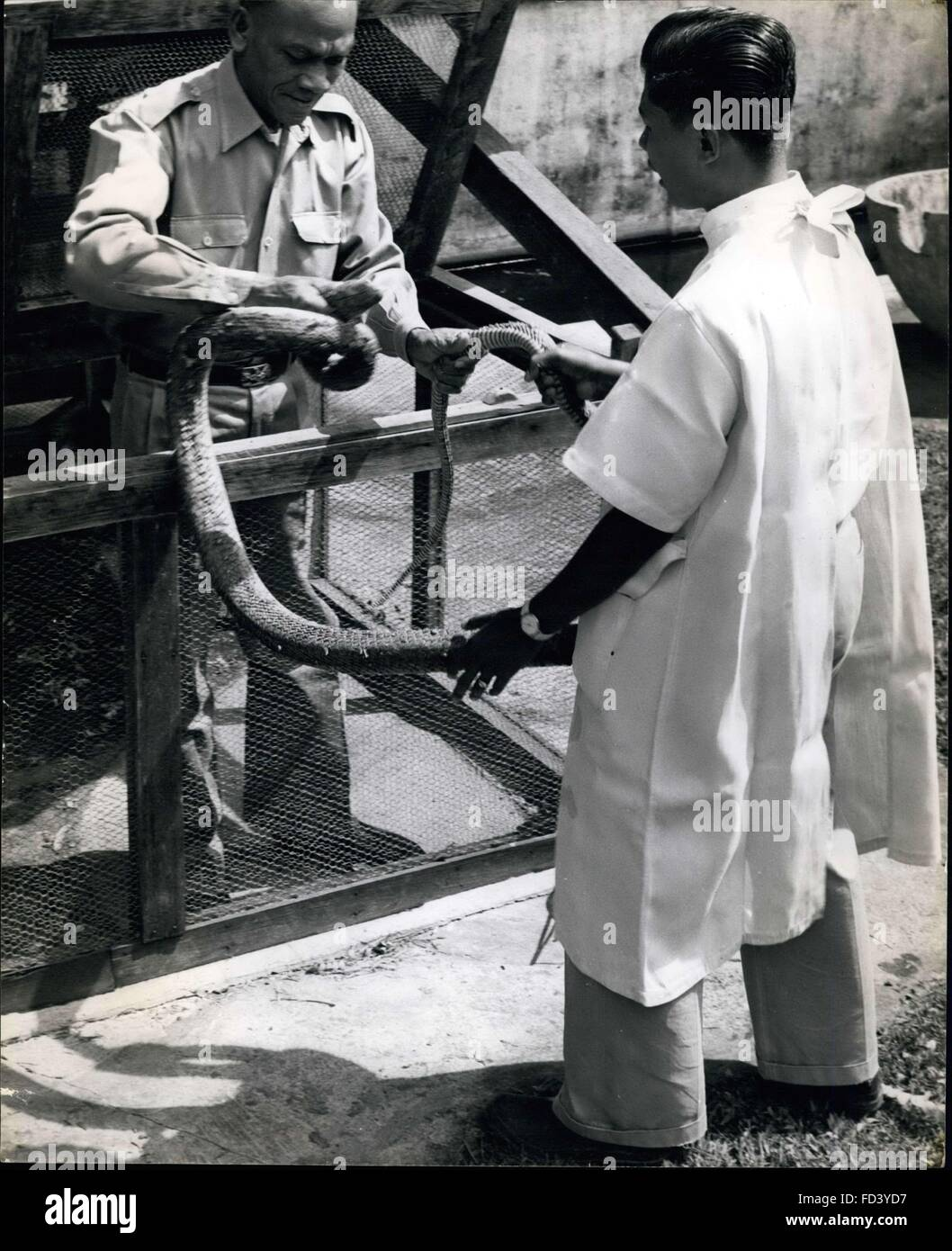1962 - Grappling with a king cobra.: Strong hands with knowledge of ...