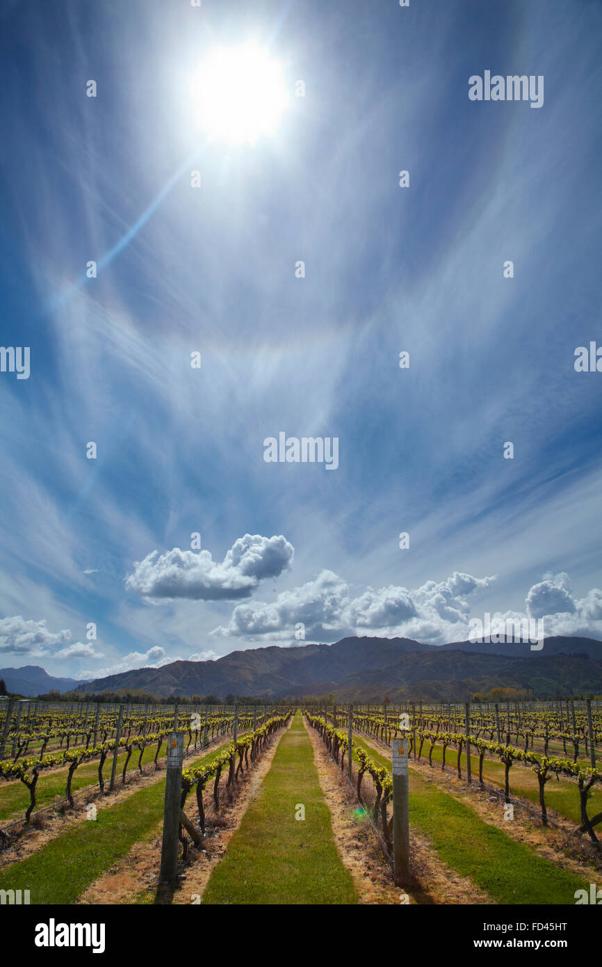 Oceanview Vineyards, Renwick, near Blenheim, Marlborough, South Island, New Zealand - Stock Image