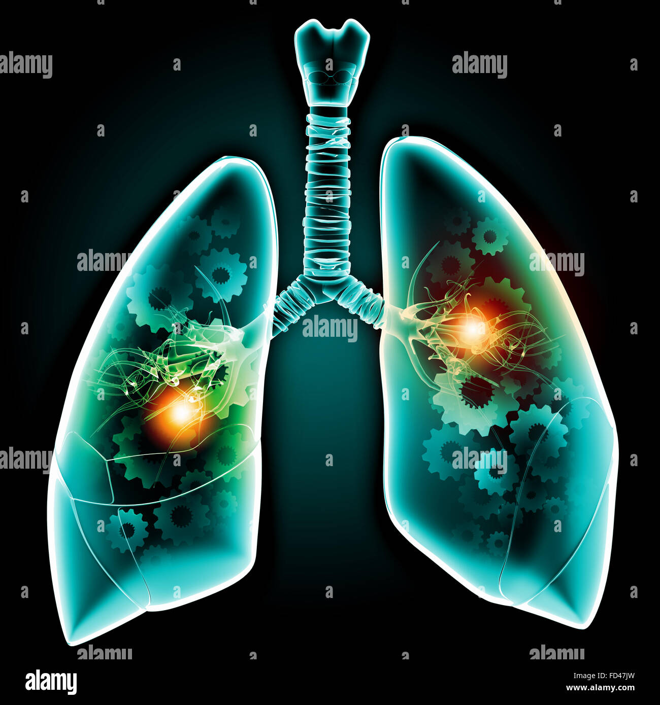 Human lungs with mechanisms. Health and medicine - Stock Image