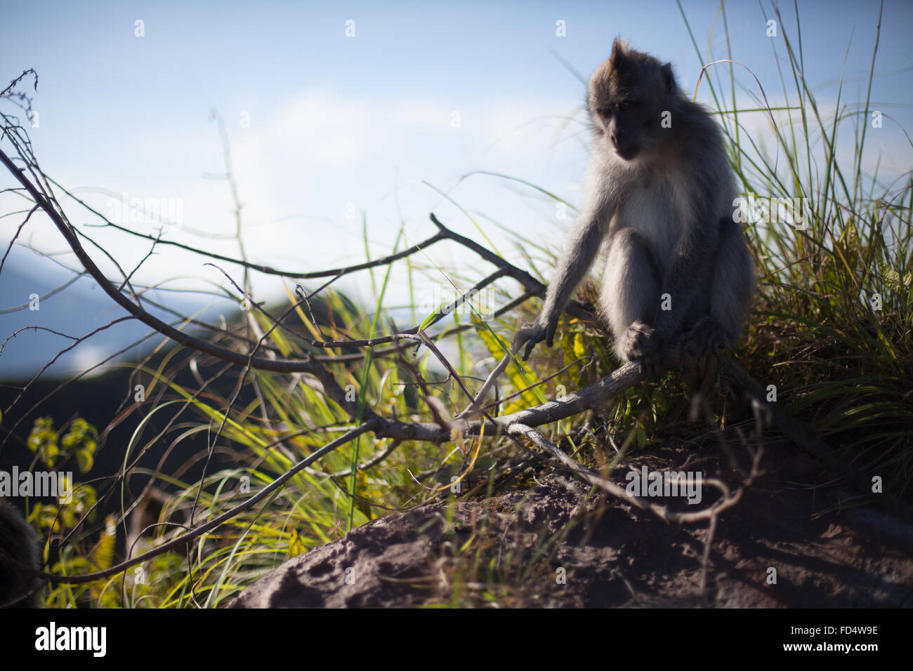 Monkey Grabbing Branch - Stock Image
