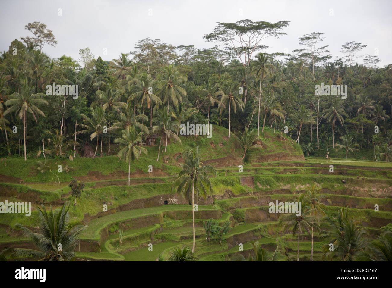 View Of Terraced Field - Stock Image