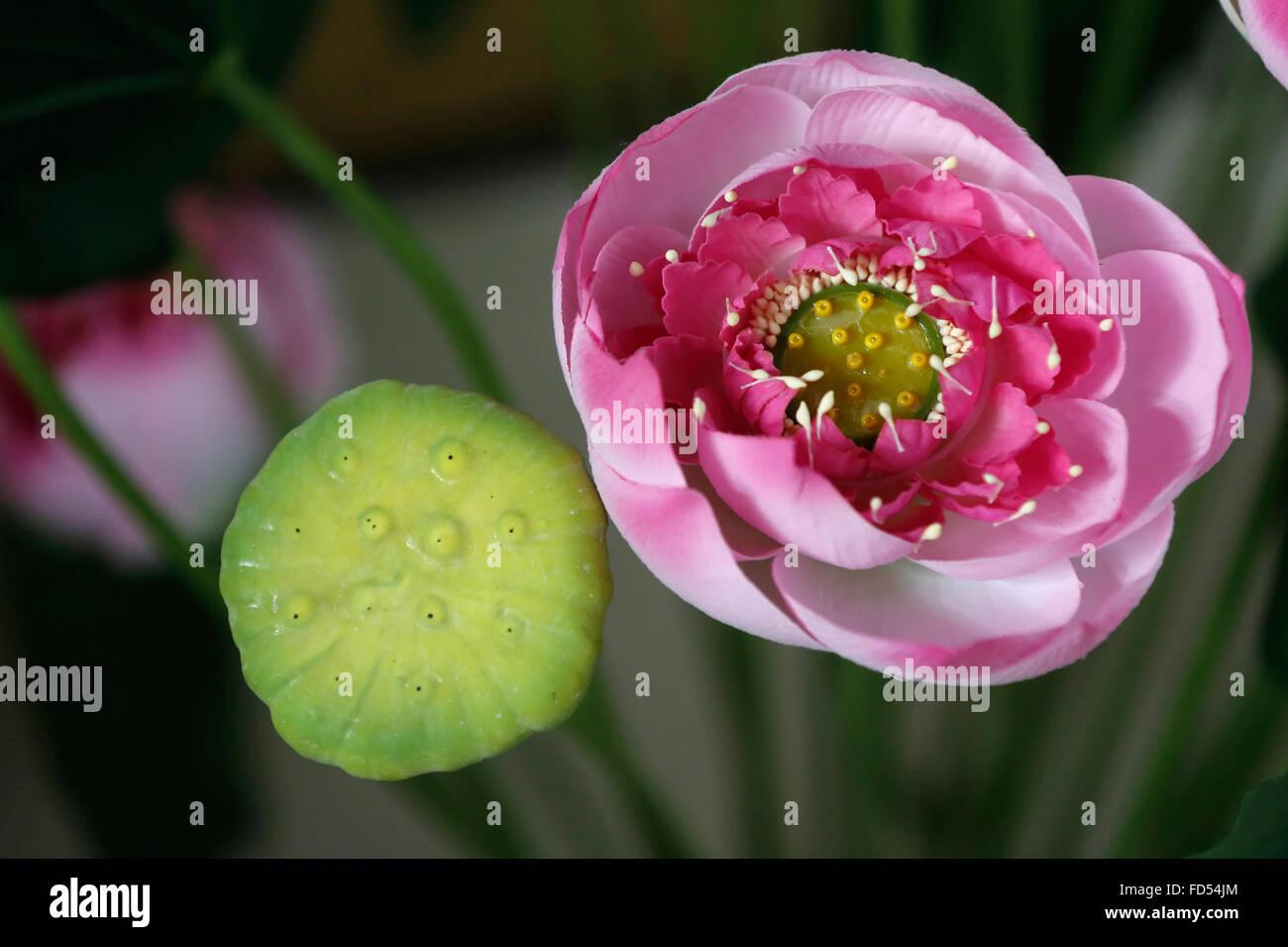 Paper Lotus Flower Stock Photo 94155788 Alamy