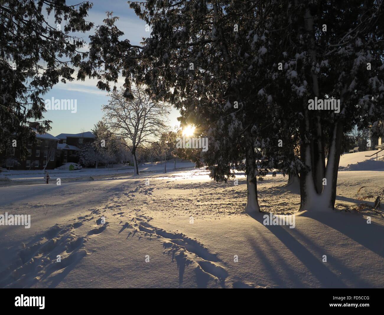 Nature Campus Snow Sun Trees Track Road Morning University - Stock Image