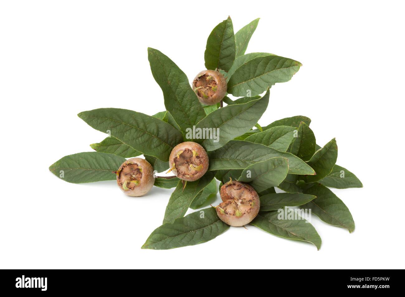 Twig with medlars on white background - Stock Image