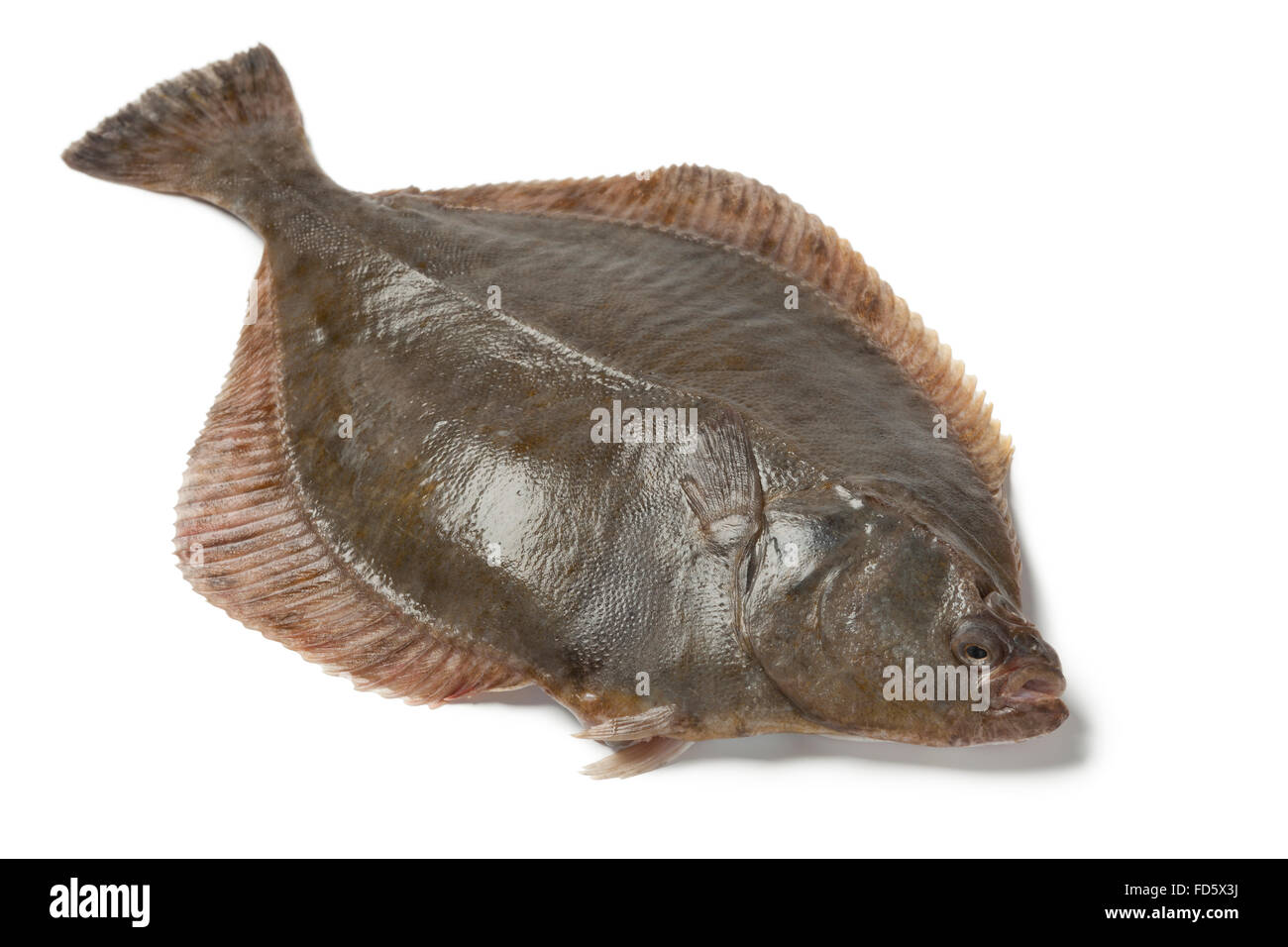 How to cut flounder