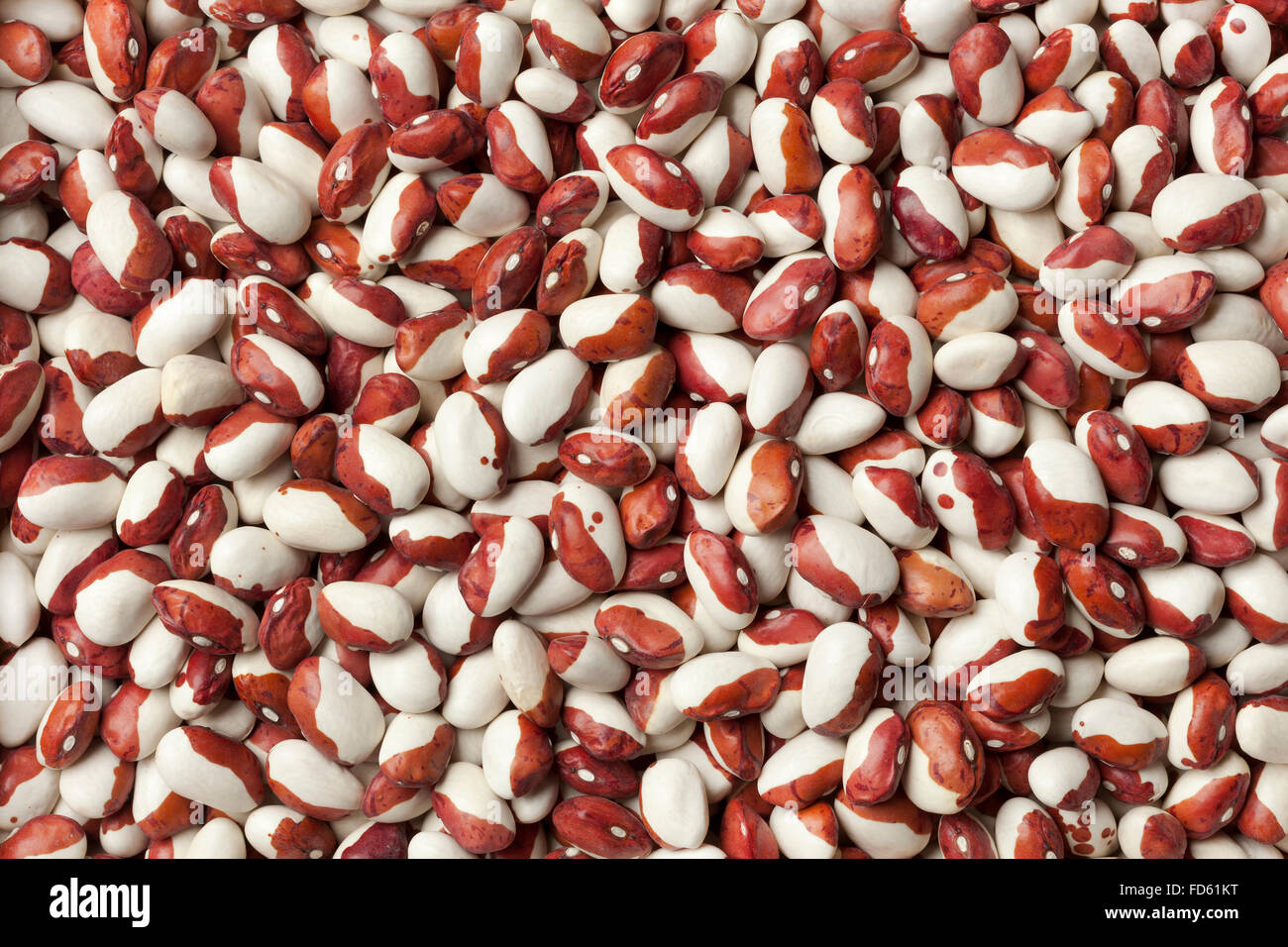 Dried Anasazi beans full frame - Stock Image