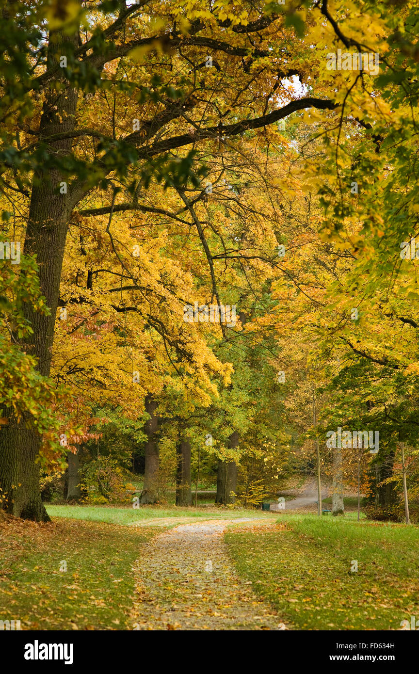 Autumn trees in grounds of Schloss Fasanerie near Fulda in Germany - Stock Image