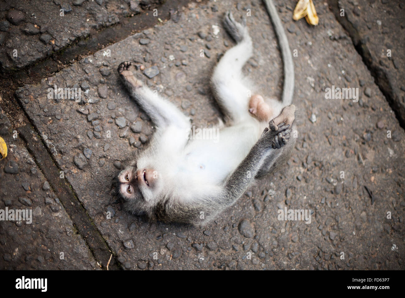 Elevated View Of Monkey On Ground - Stock Image