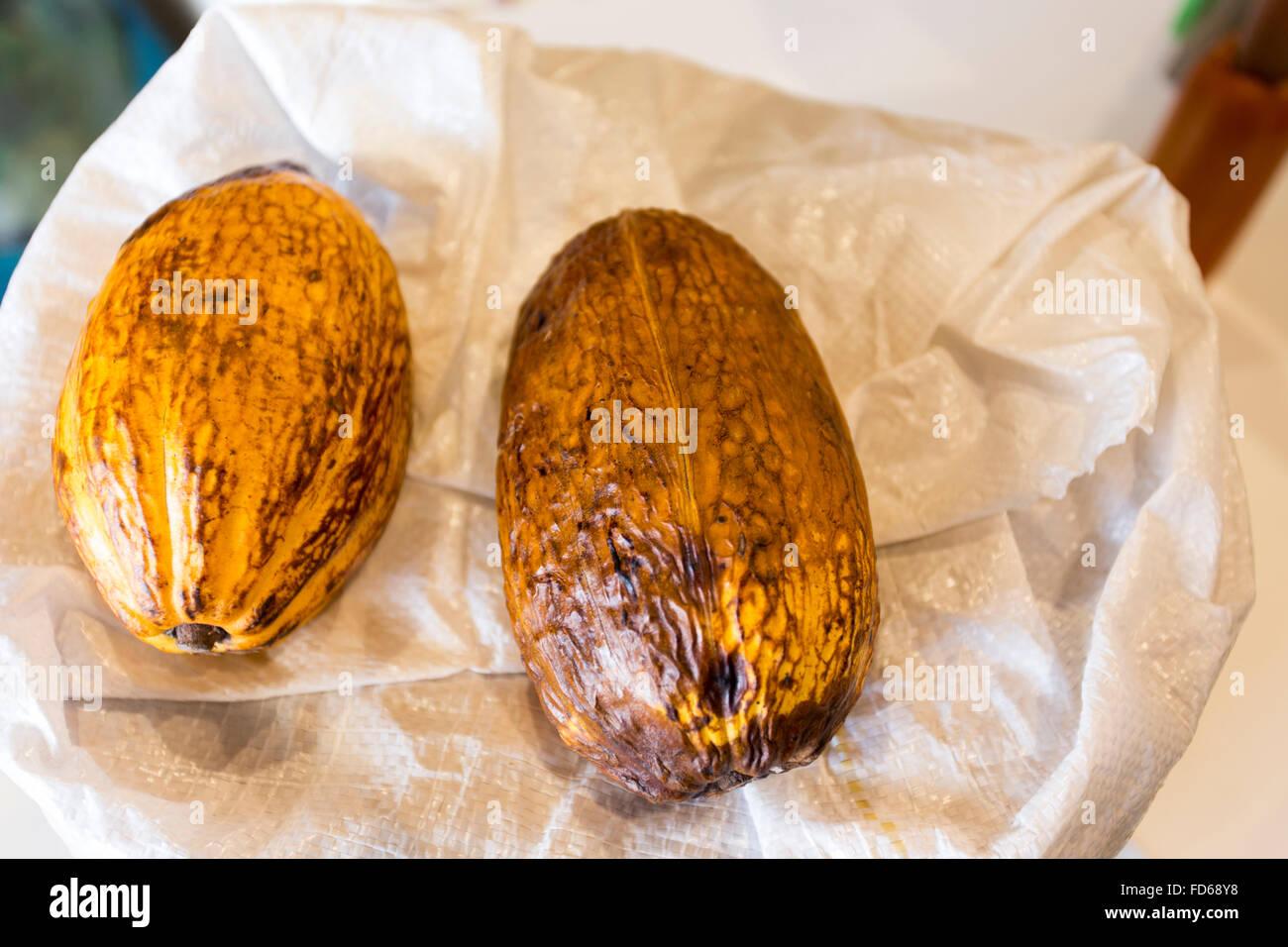 Cocoa pods (cocoa, cacao, pod) - Stock Image