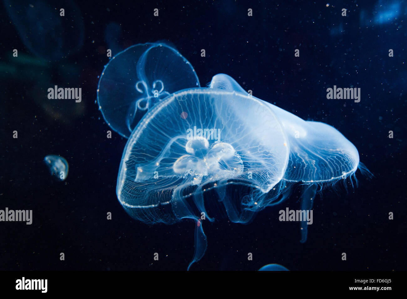 Jellyfish In The Sea - Stock Image