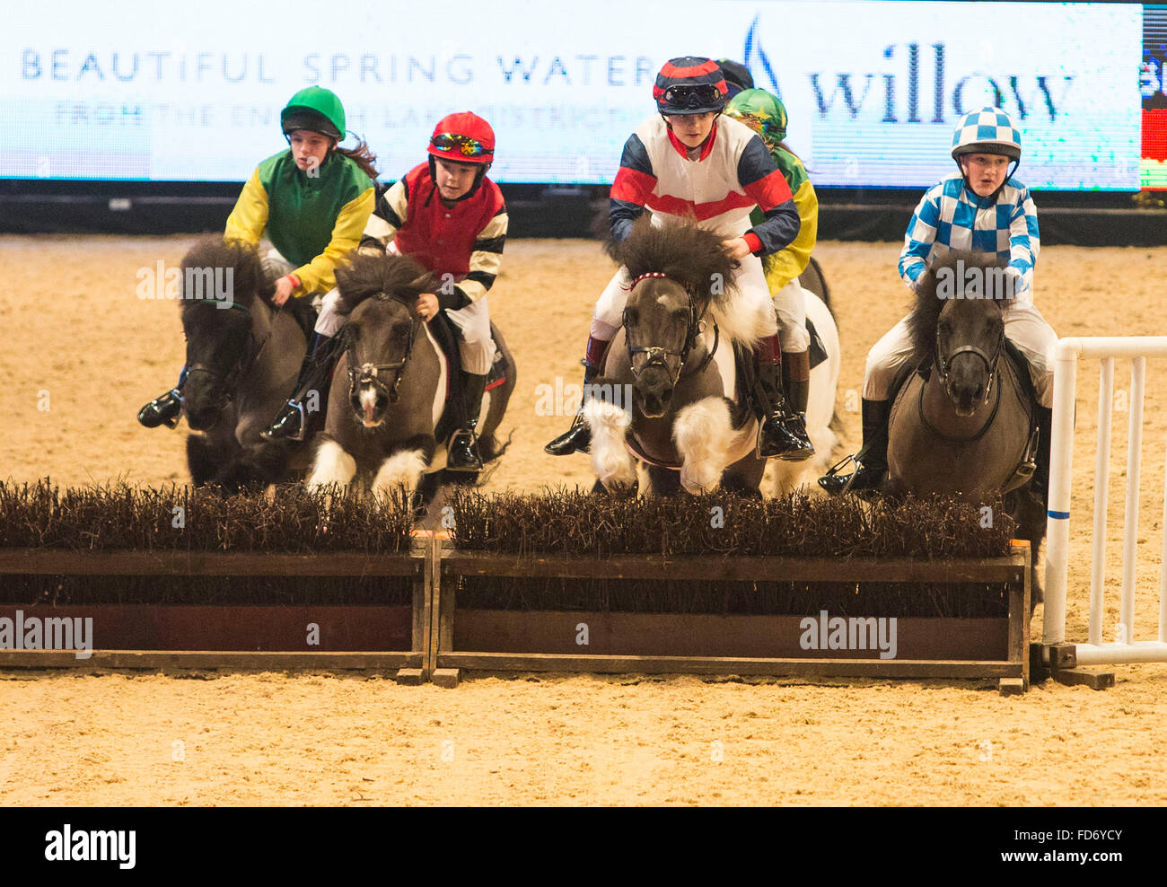 The Liverpool International Horse Show today (Sunday 3/1/16). The Shetland Grand National takes place Stock Photo