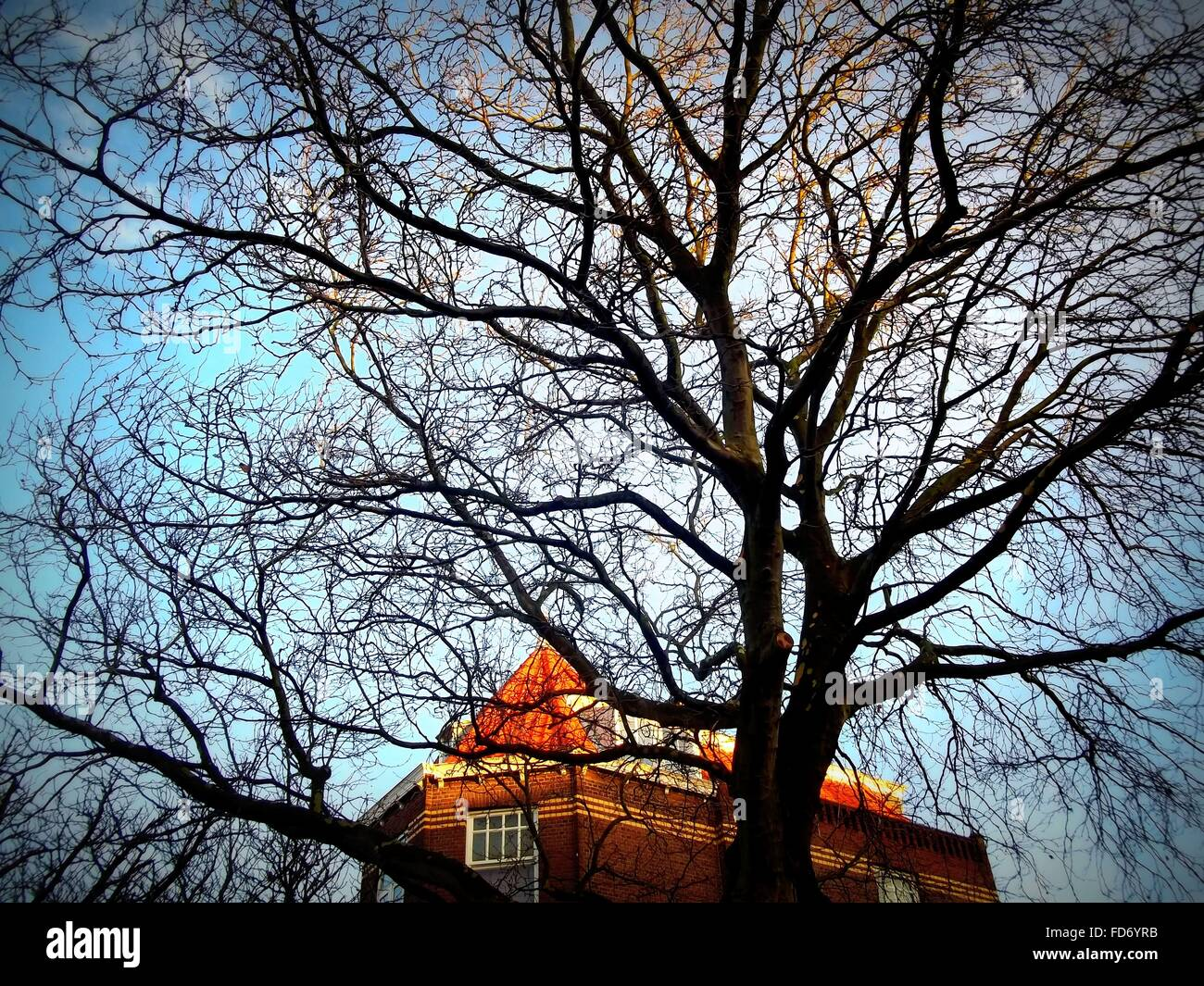 Close-Up View Of Leafless Tree With Top Of Building In Background - Stock Image