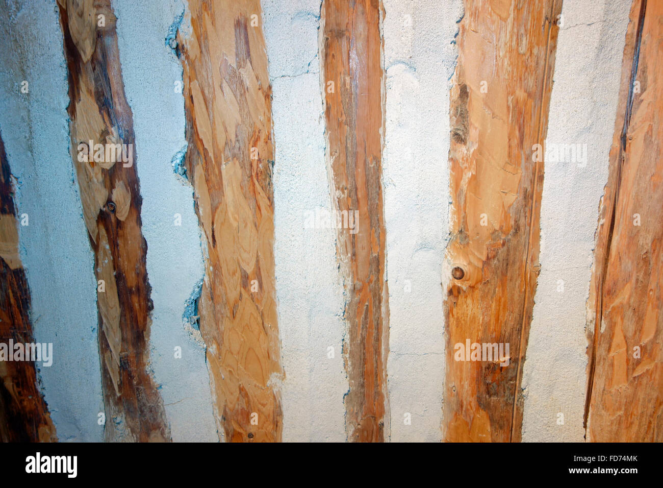 Piquet or vertical log construction, a technique in which builders either drove the logs into the ground or stood - Stock Image