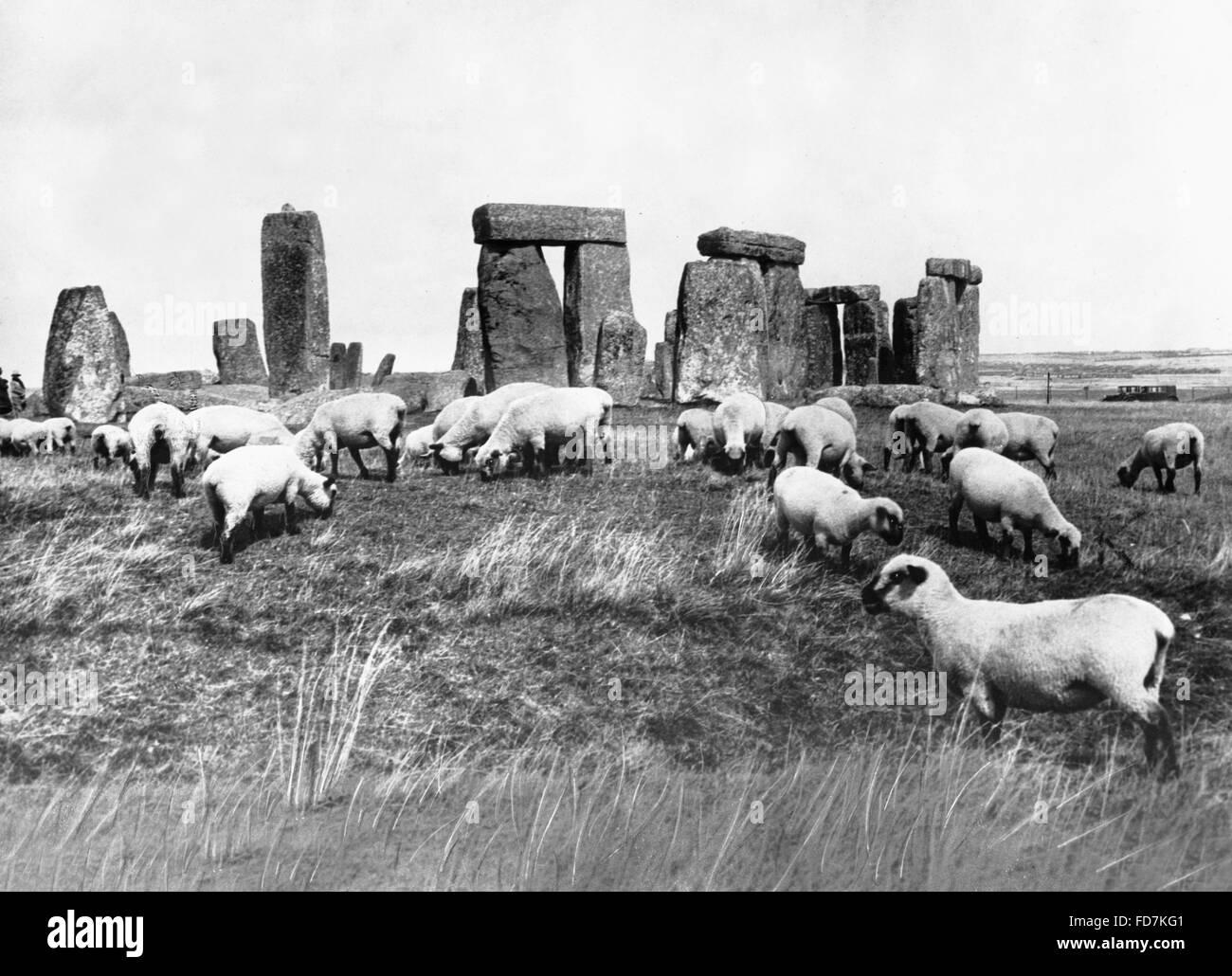 Sheep at Stonehenge in England, 1933 Stock Photo
