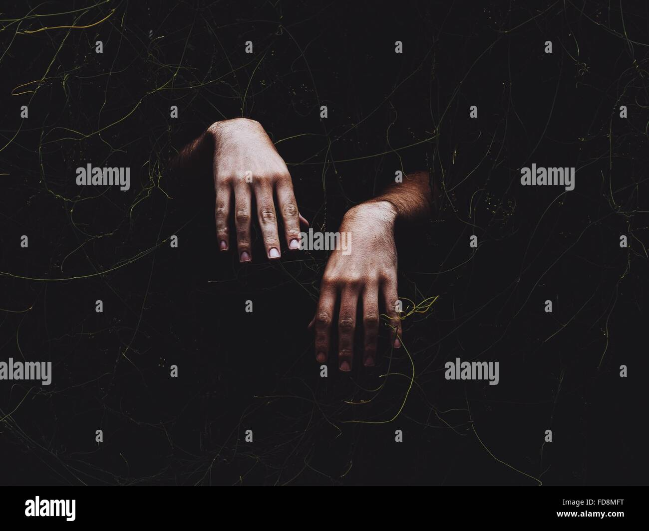Cropped Image Of Hand Coming Out From Ivy Covered Wall At Night - Stock Image