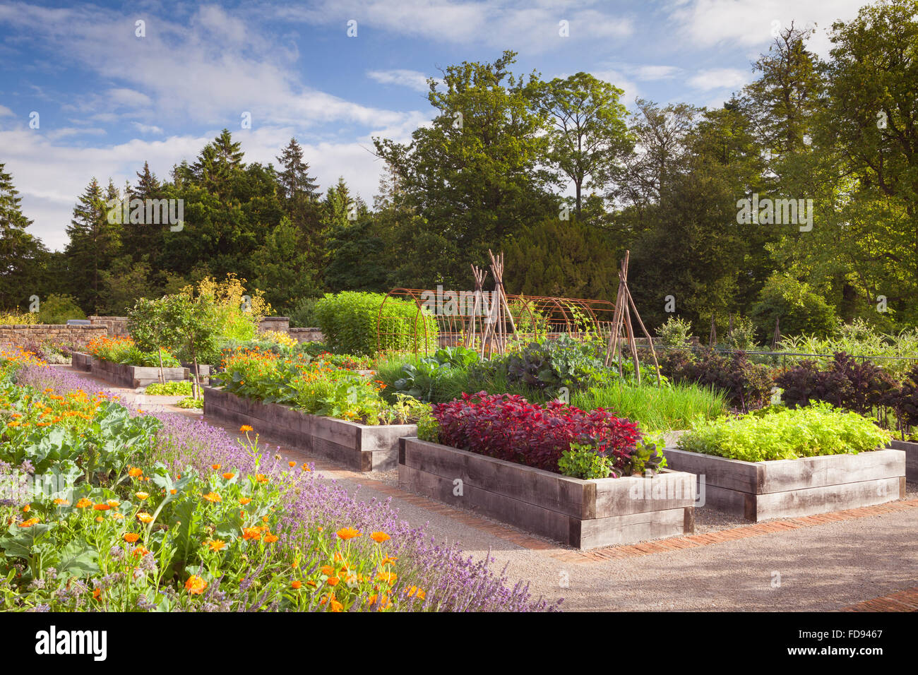 Raised Beds Made Of Quercus Robur English Oak The Kitchen Garden Stock Photo Alamy