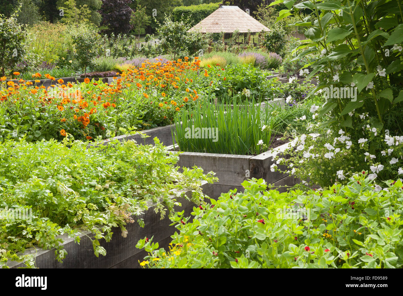 The Kitchen Garden at Rudding Park, North Yorkshire, UK. Summer, July 2015. Stock Photo