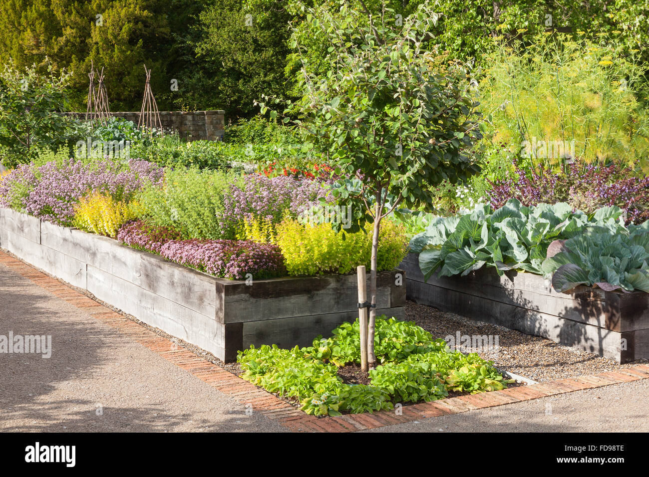 Picture of: Raised Beds Made Of Quercus Robur English Oak The Kitchen Garden Stock Photo Alamy