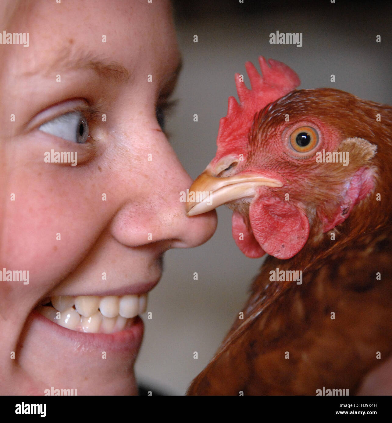Isobel Coomber a volunteer from Animaline in Horsted Keynes with a chicken that is amongst thousands looking for - Stock Image