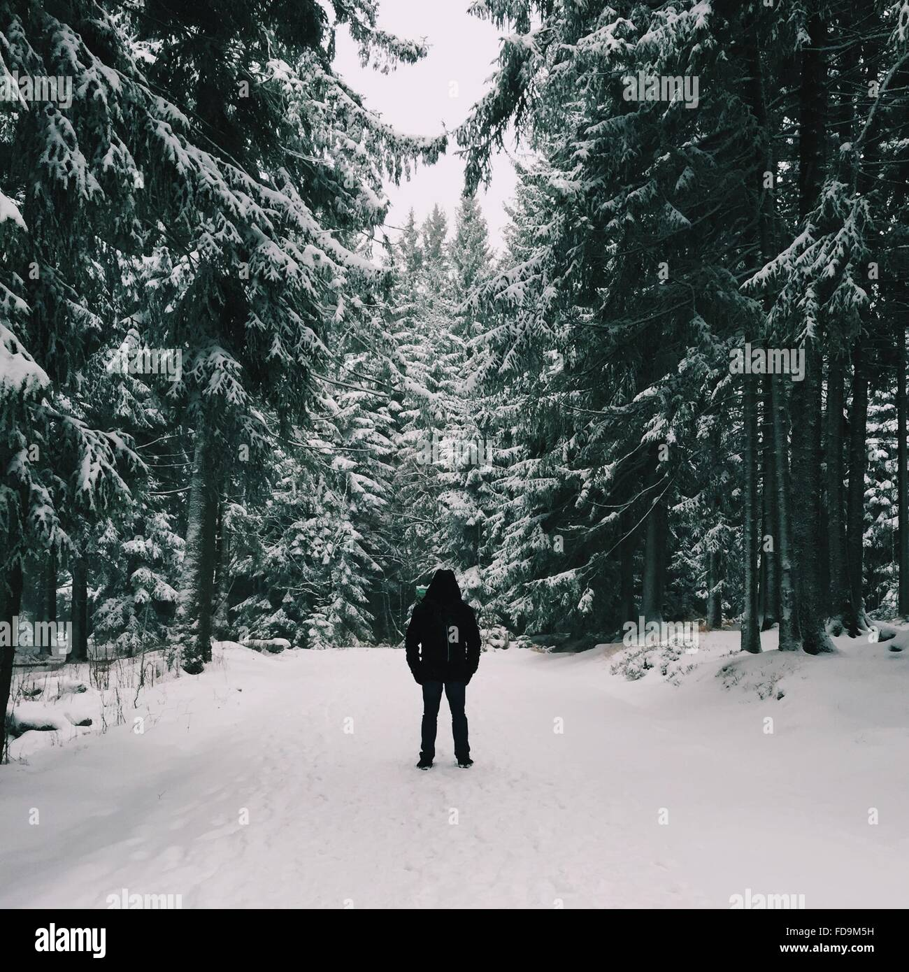 Person Standing On Snowcapped Footpath Against Trees - Stock Image