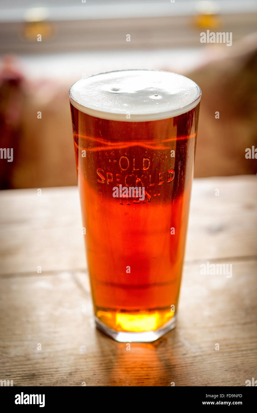 A pint of Old Speckled Hen real ale or beer on a wooden pub table - Stock Image