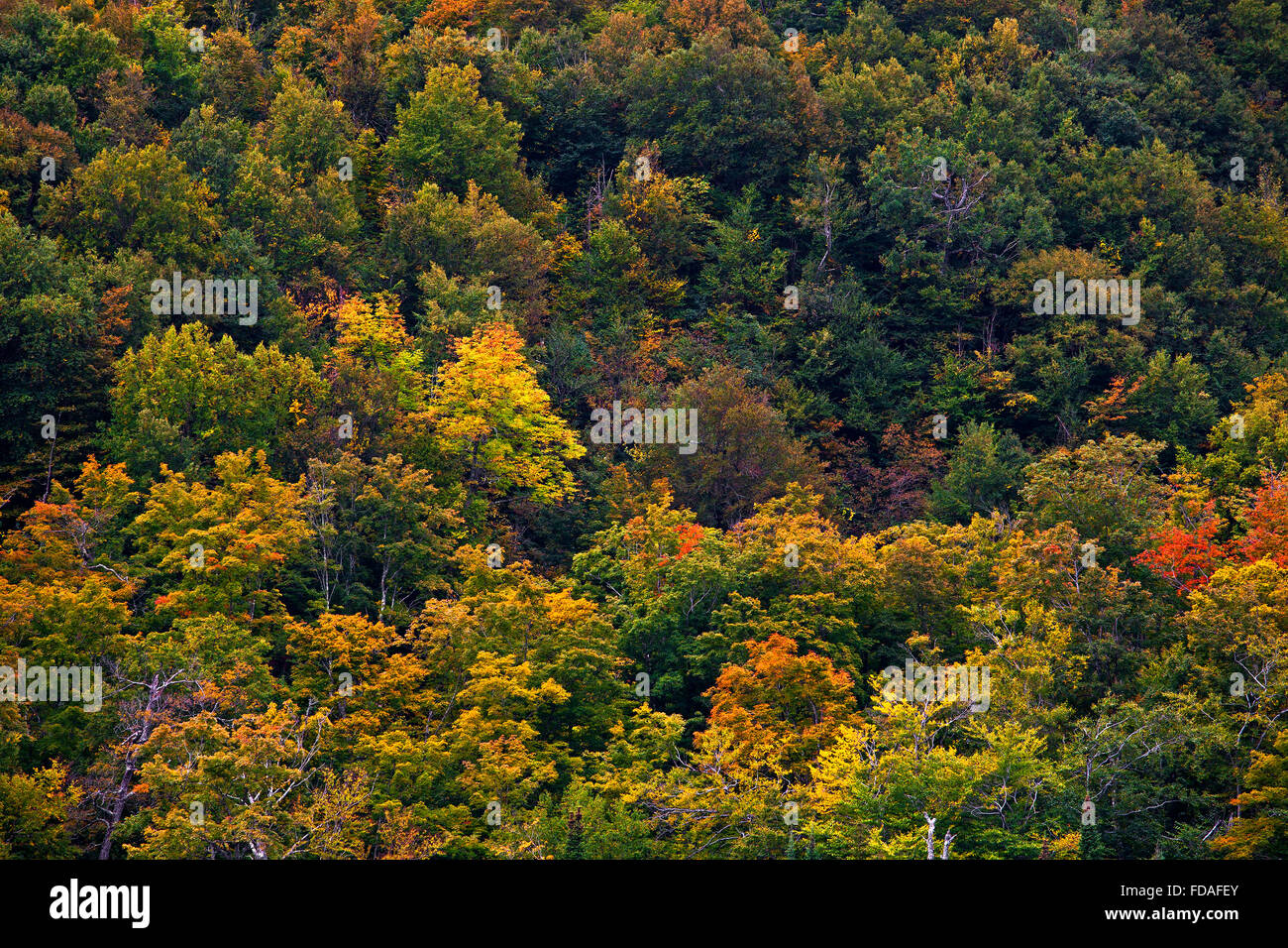 Early autumn colors, Eastern Townships, West Bolton, Quebec, Canada - Stock Image