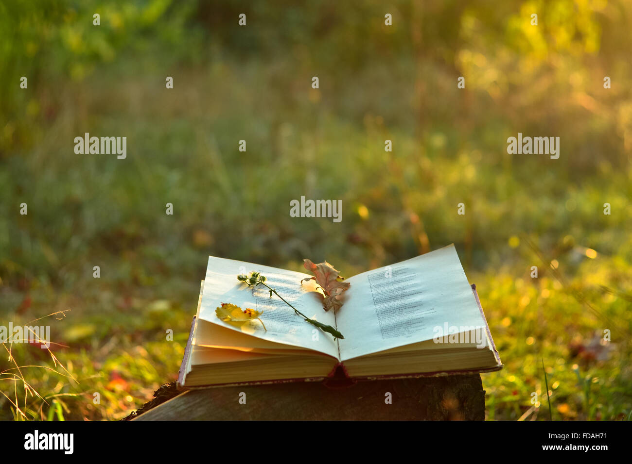 Book of poetry outdoors with fallen leaves and flower on it - Stock Image