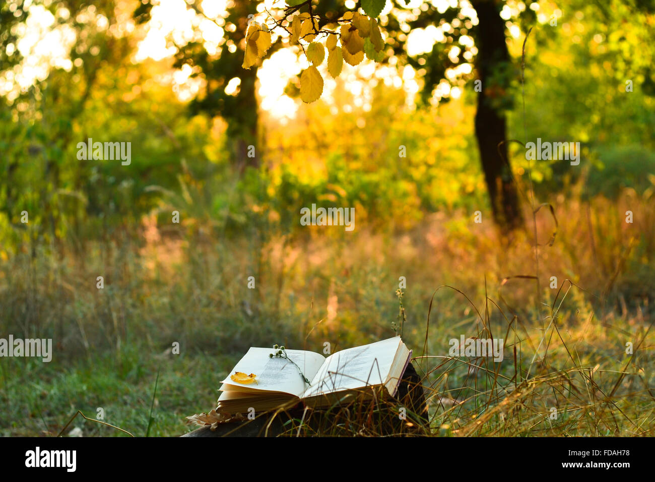 Book of poetry outdoors with fallen leaf on it, under a tree in front of blurred sunset - Stock Image
