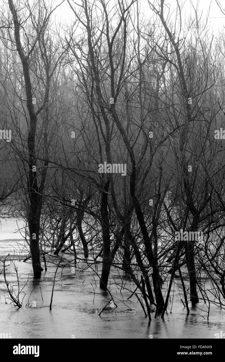 Trees in frozen lake water - Stock Image