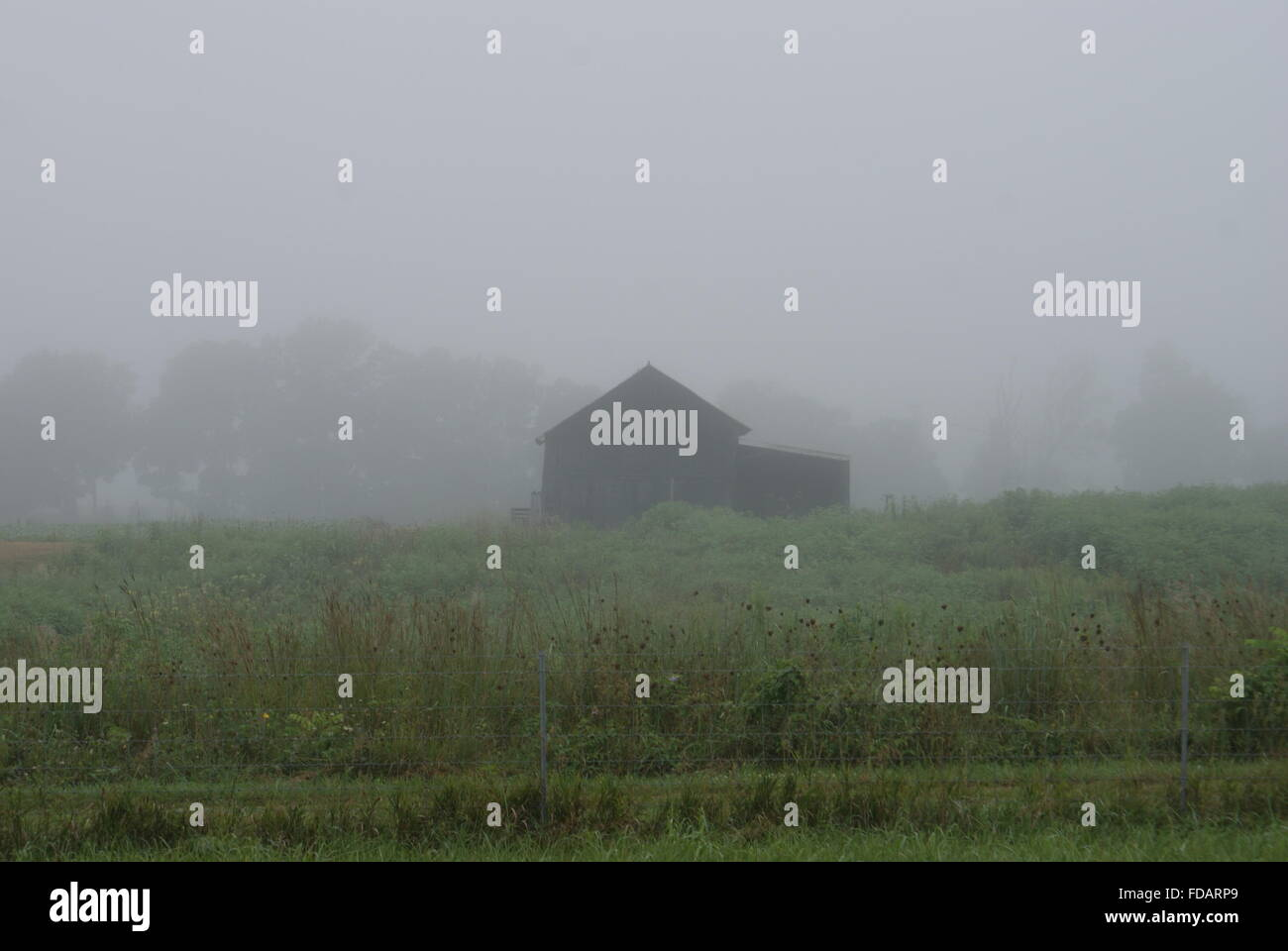 An early foggy morning and an old  Kentucky barn in the back ground. - Stock Image