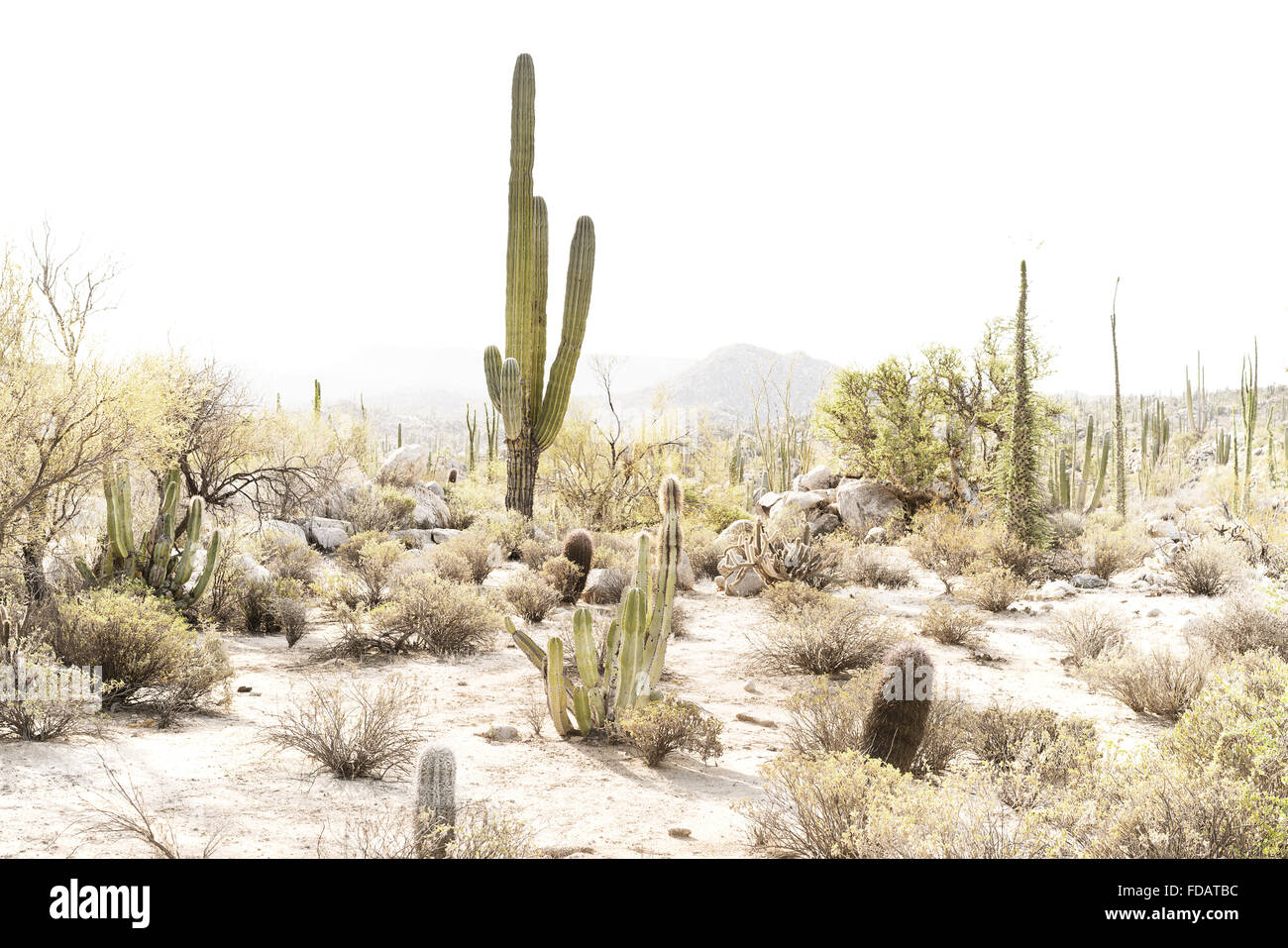 Desert scene in Baja California, Mexico - Stock Image
