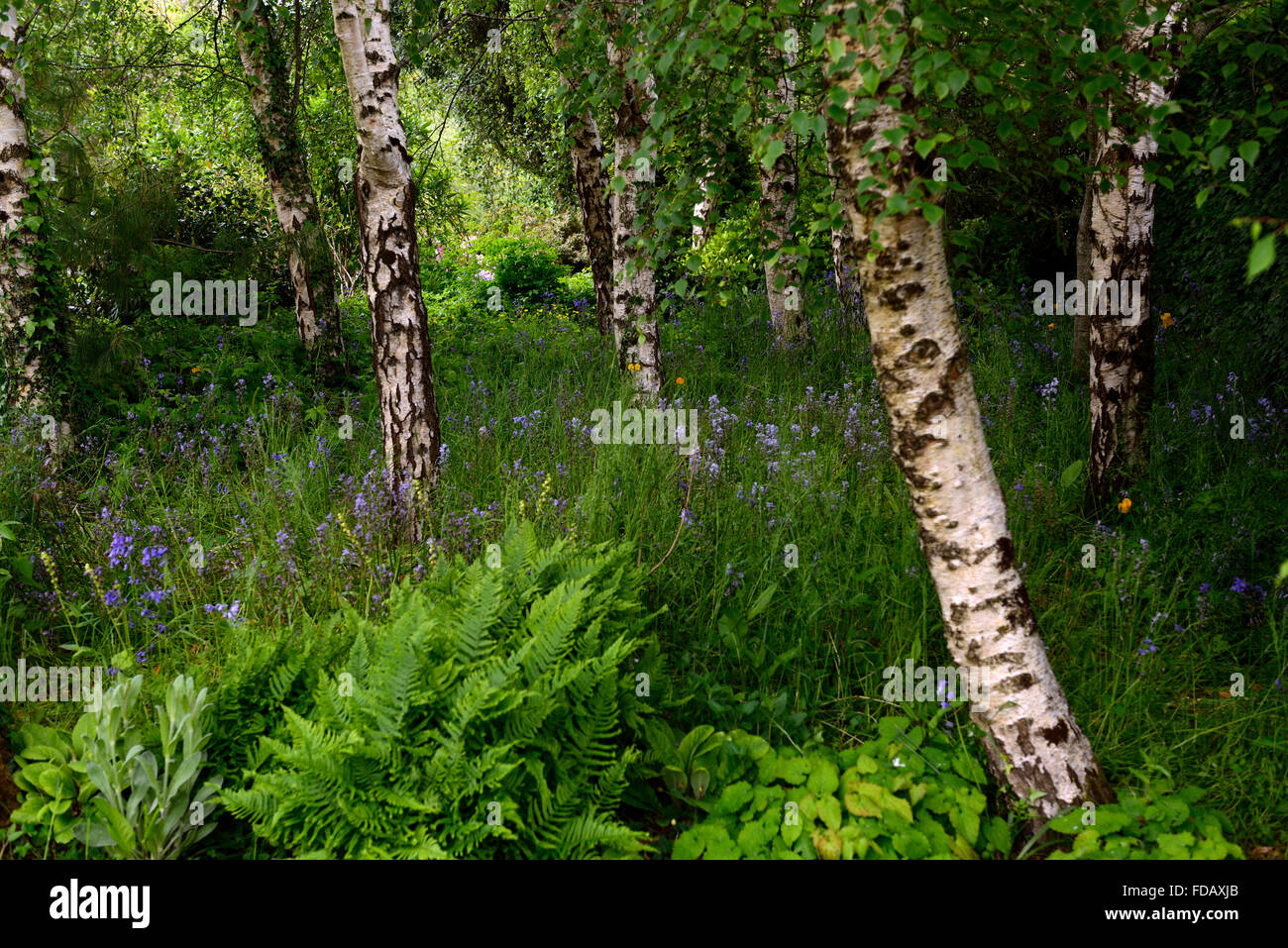 bluebells and ferns stock photos bluebells and ferns. Black Bedroom Furniture Sets. Home Design Ideas