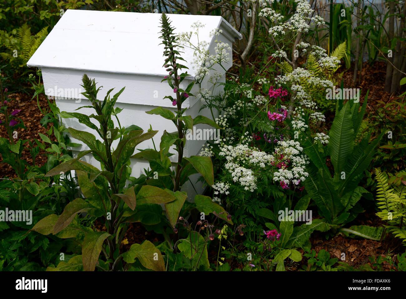 white beehive foxglove cow parsley primula wildlife garden bee friendly nectar pollen rich planting scheme gardening - Stock Image