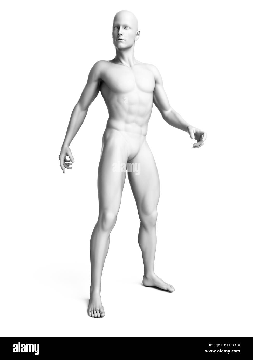 Anatomy of a man standing, illustration Stock Photo: 94291594 - Alamy