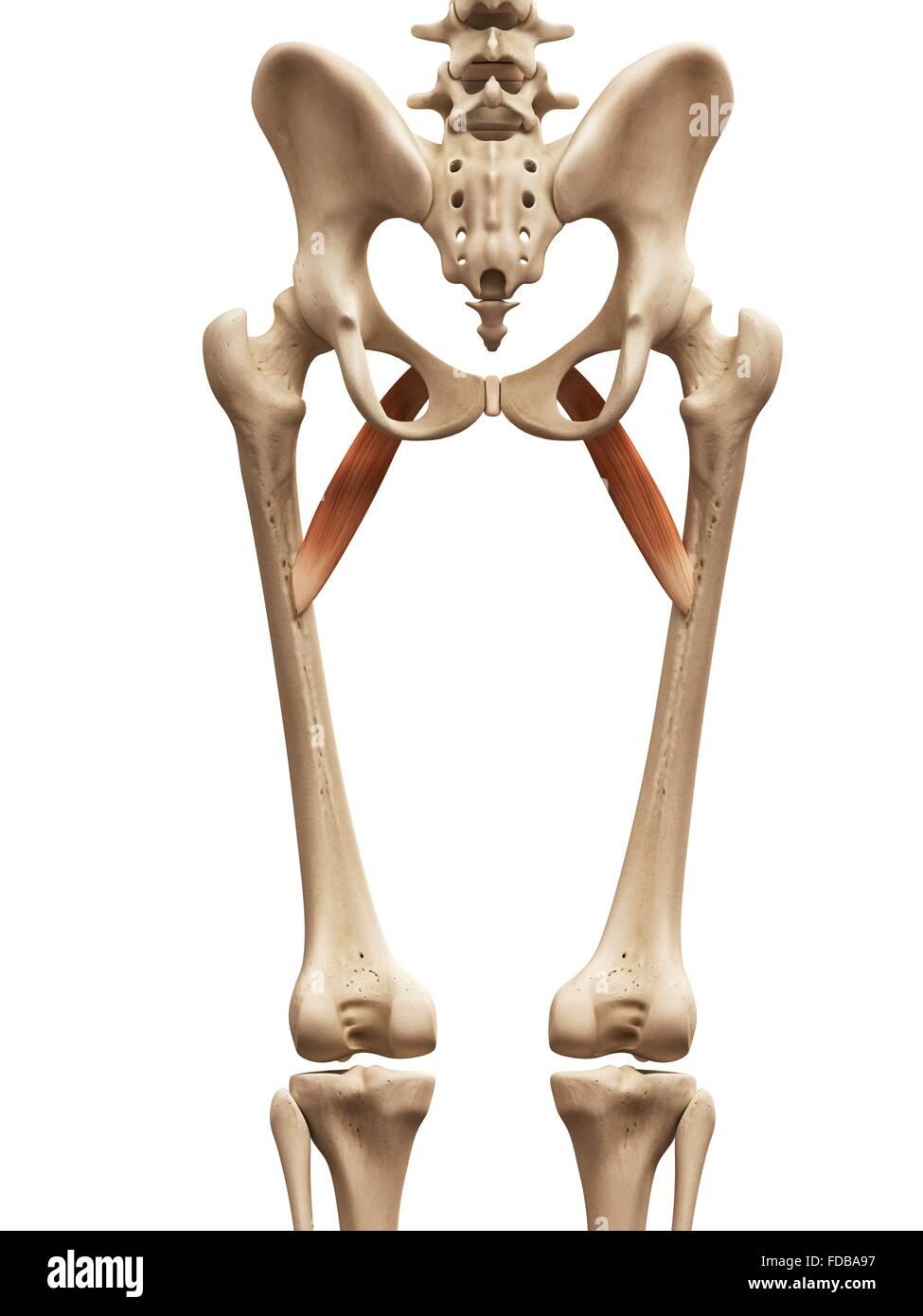 Ungewöhnlich Linke Unterlappen Anatomie Galerie - Anatomie Ideen ...