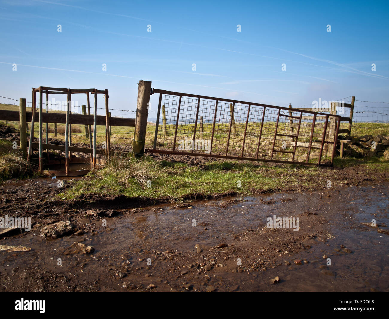 Watering hole for cattle on the path to Hartshead Pike - Stock Image
