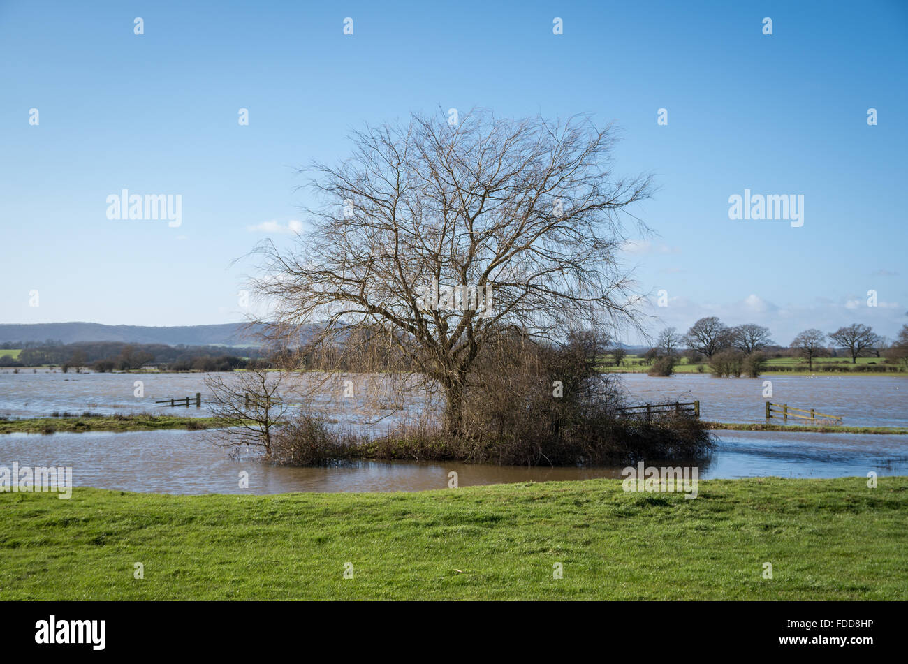 Trees and bushes of the Sussex countryside with flooding from rainfall on the flood plains of the River Adur on Stock Photo