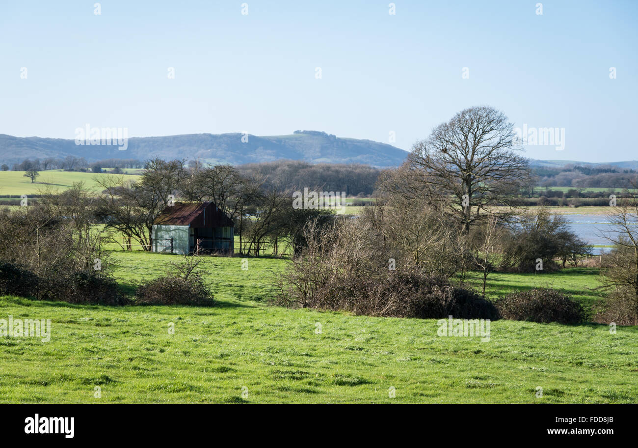A corrugated metal barn or shed with trees and floodwater in Winter, with Chanctonbury Ring in the background. Sussex, Stock Photo
