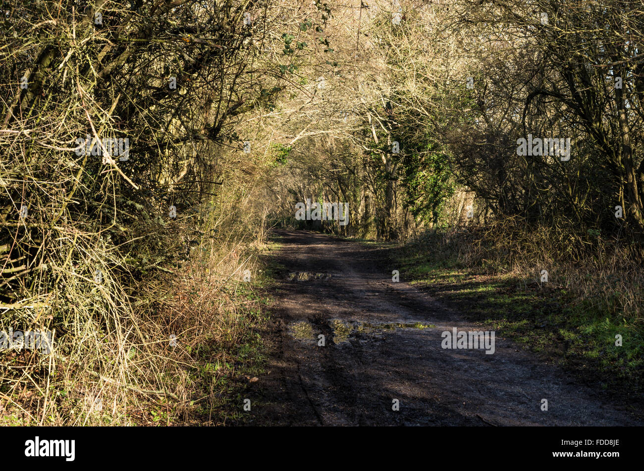 Disused old railway line closed by Beeching, now the Downs Link footpath and bridleway in the Sussex South Downs. - Stock Image