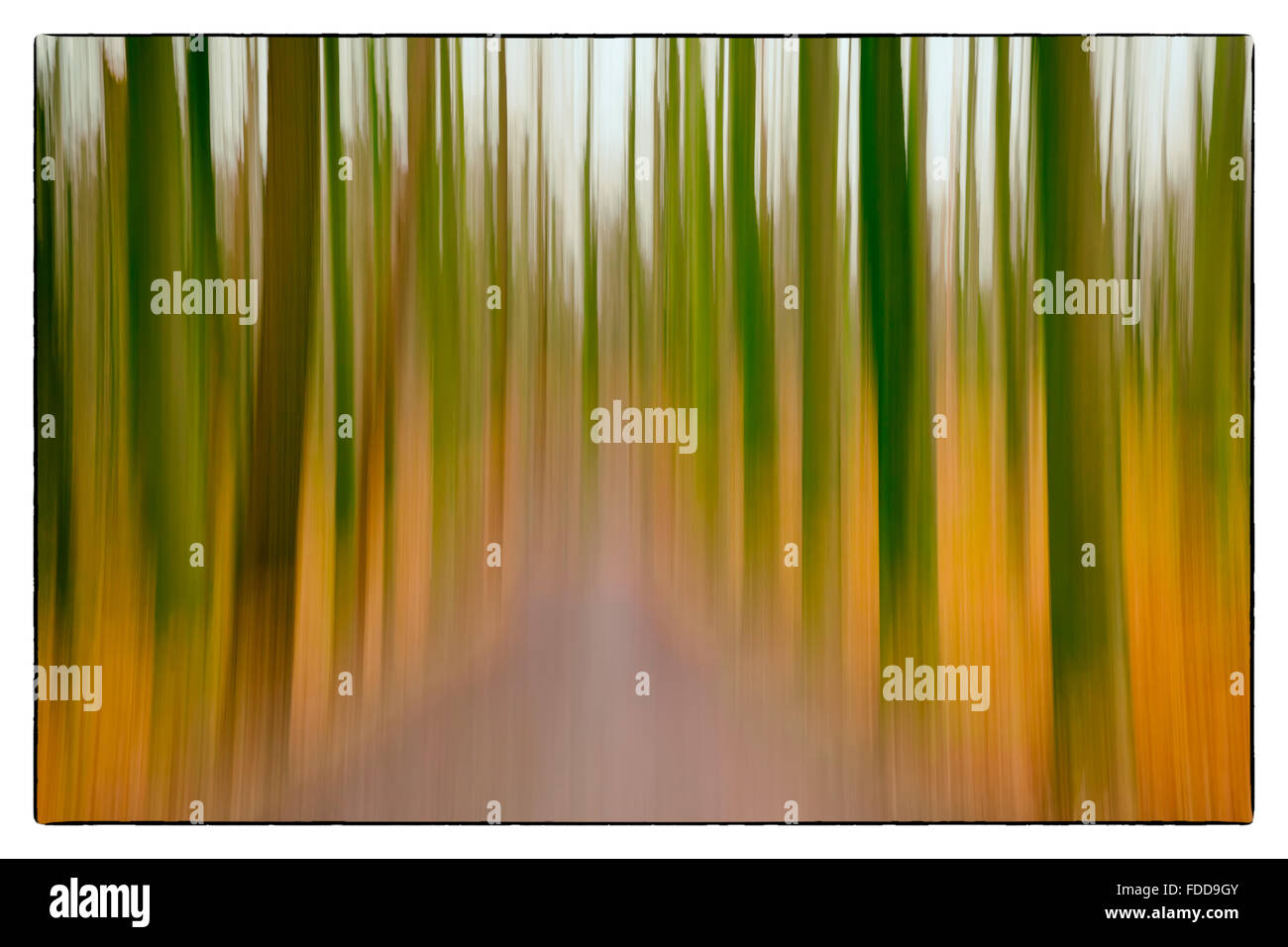 A conceptual photo using slow shutter speed of trees in a forest showing green, orange leaves and lavender colours Stock Photo