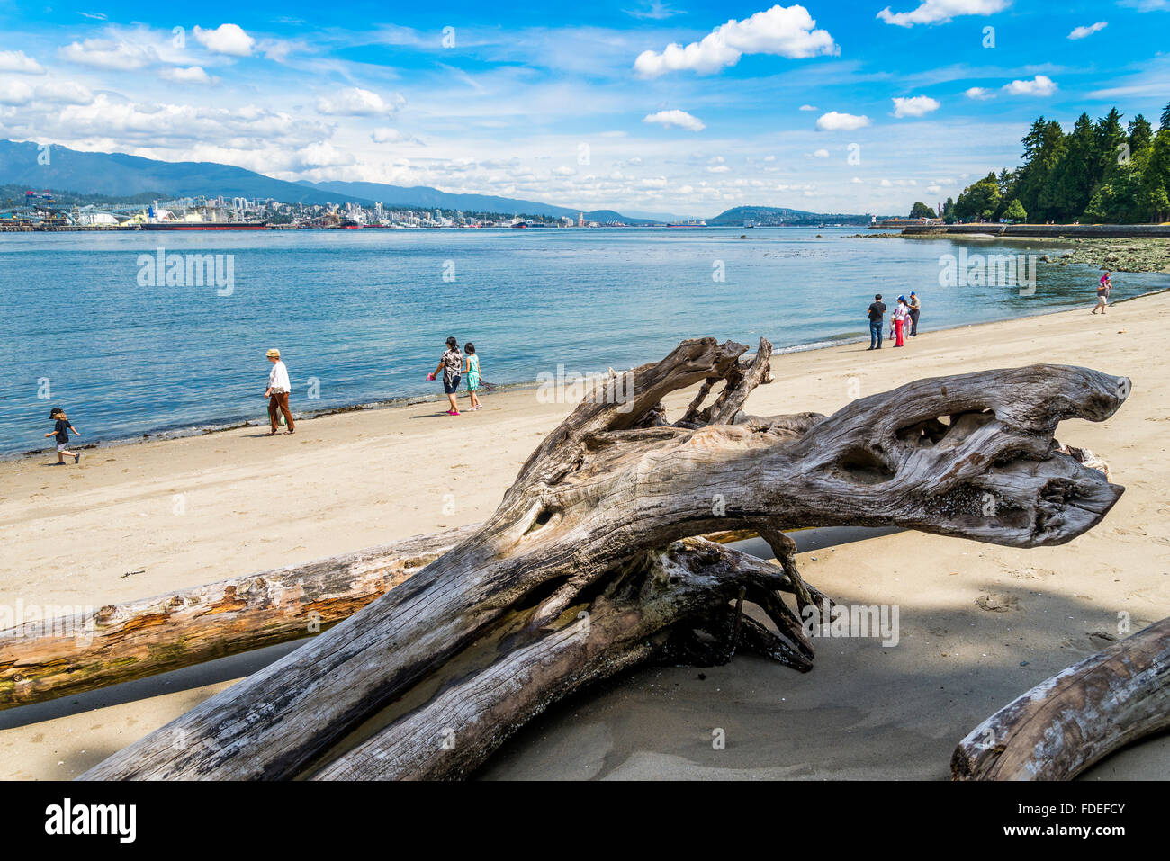 Driftwood logs on beach at Stanley Park, Vancouver, British Columbia, Canada - Stock Image