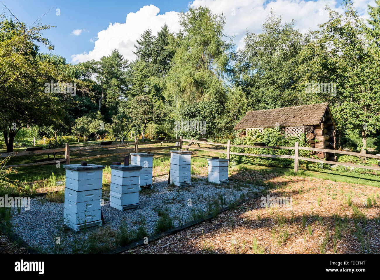 Bee hives and old log shed, VanDusen Gardens, Vancouvrt, British Columbia, Canada - Stock Image