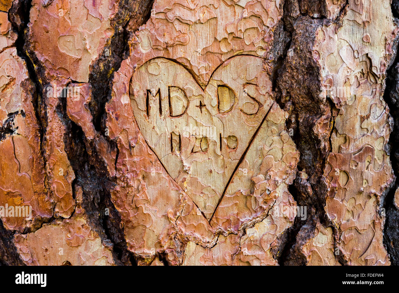 Heart and initials carved on p[onderosa pine tree - Stock Image