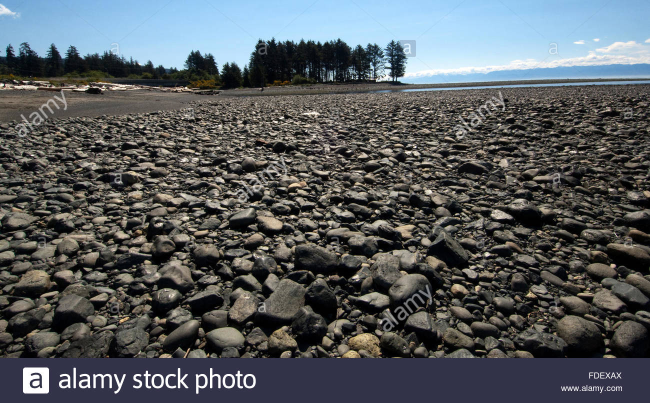 Stony beach with a copse of trees in the background. West coast highway, between Sooke and Port Renfrew.Vancouver - Stock Image