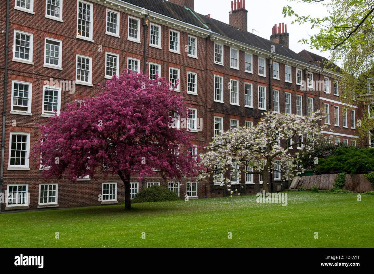 Trees in blossom and buildings at Gray's Inn, London, one of the four Inns of  Court of the British legal system - Stock Image