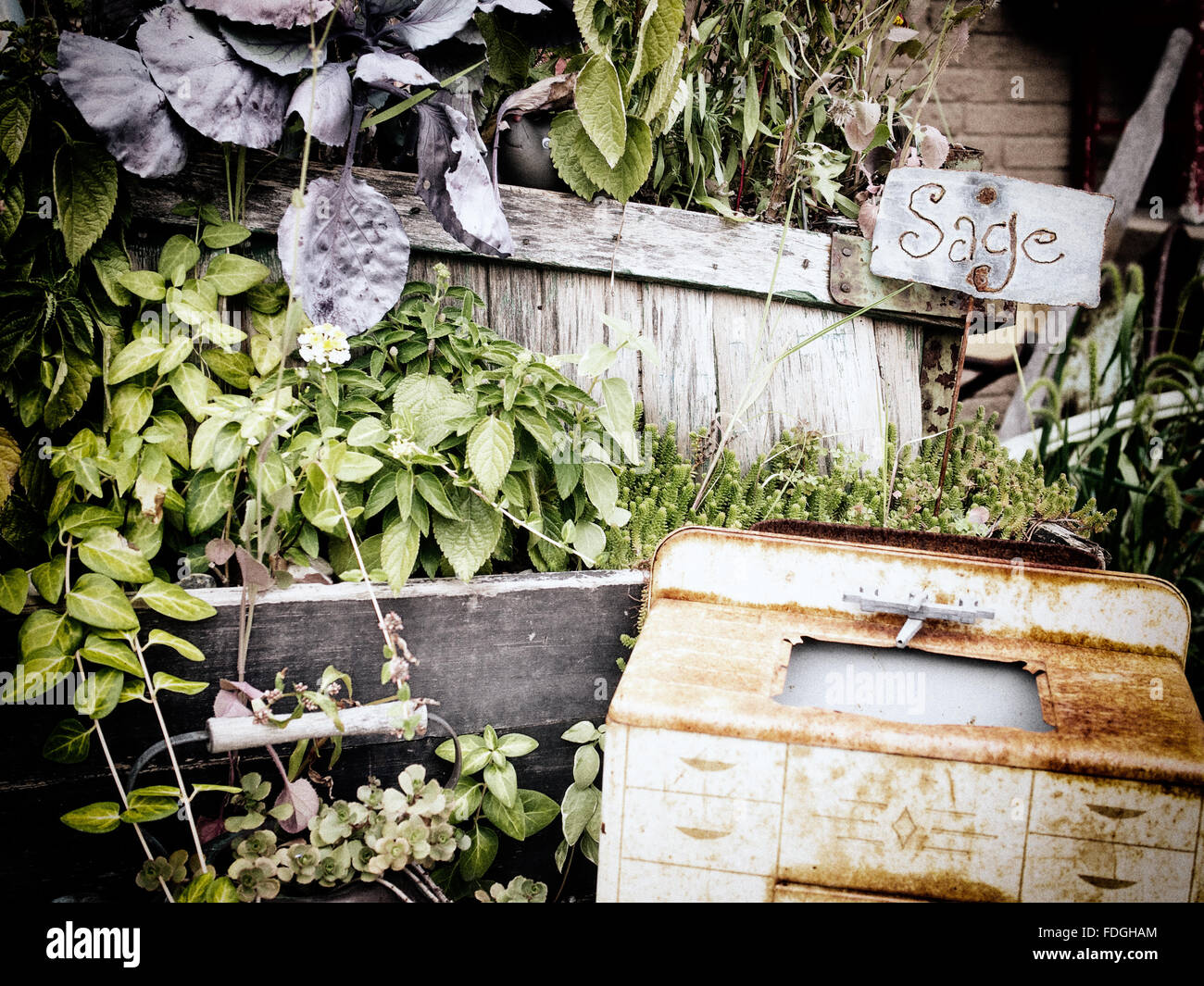 Chaotic urban garden with herbs and rusted junk - Stock Image