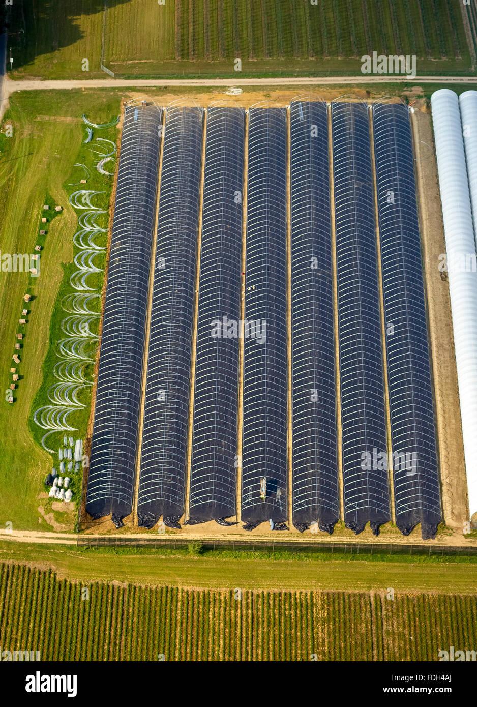 Air, Greenhouse, Bottrop, Ruhr region, Kirchhellen, North Rhine Westphalia, Germany, Europe, Aerial view, birds - Stock Image