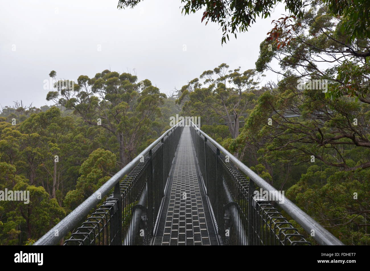 Tree Top Walk in the Valley of the Giants, Walpole-Nornalup National Park, Western Australia - Stock Image