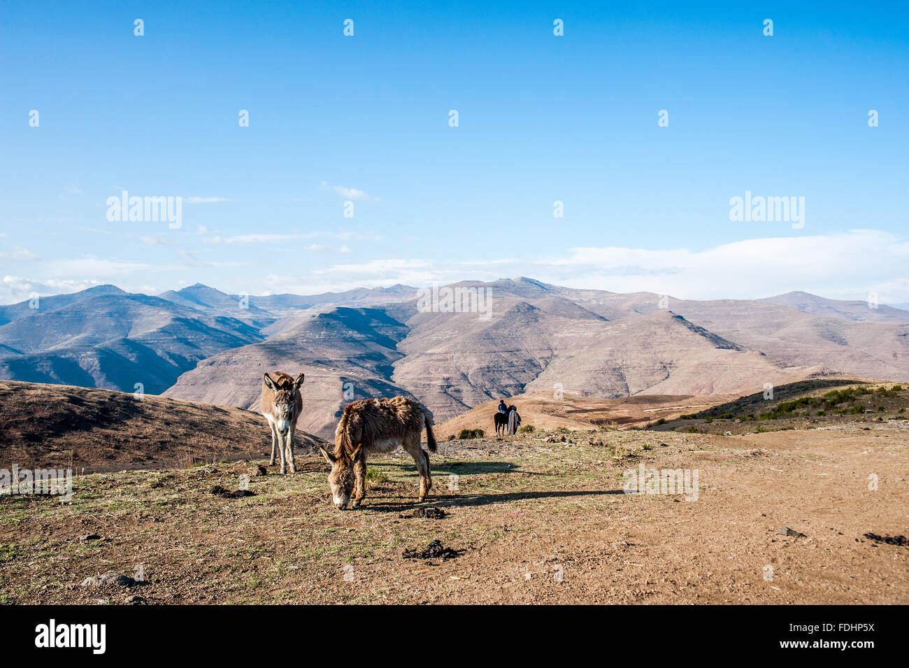Donkeys grazing and a person on horseback in the mountains of Lesotho, Africa - Stock Image